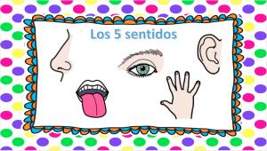 los-5-sentidos-1